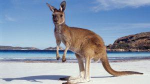 эксклюзивные туры в Австралию