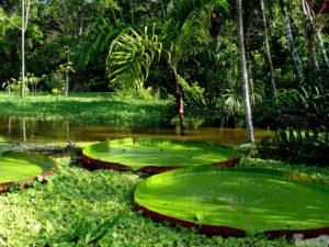 рыбалка на Амазонке эксклюзивные туры