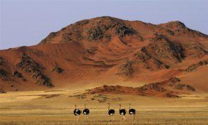 Намибия нестандартные туры