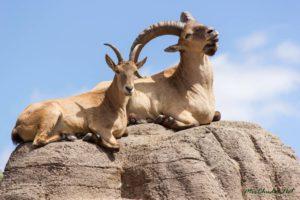 Охота в горах Дагестана