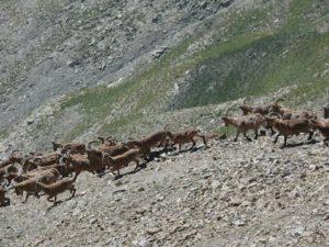 Охота в горах Тянь-Шаня