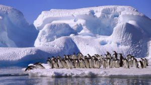 эксклюзивные туры в Антарктиду