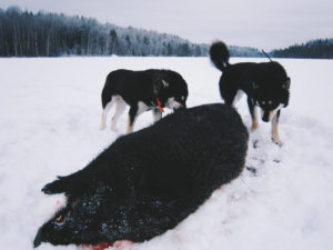 охота в Тверской области