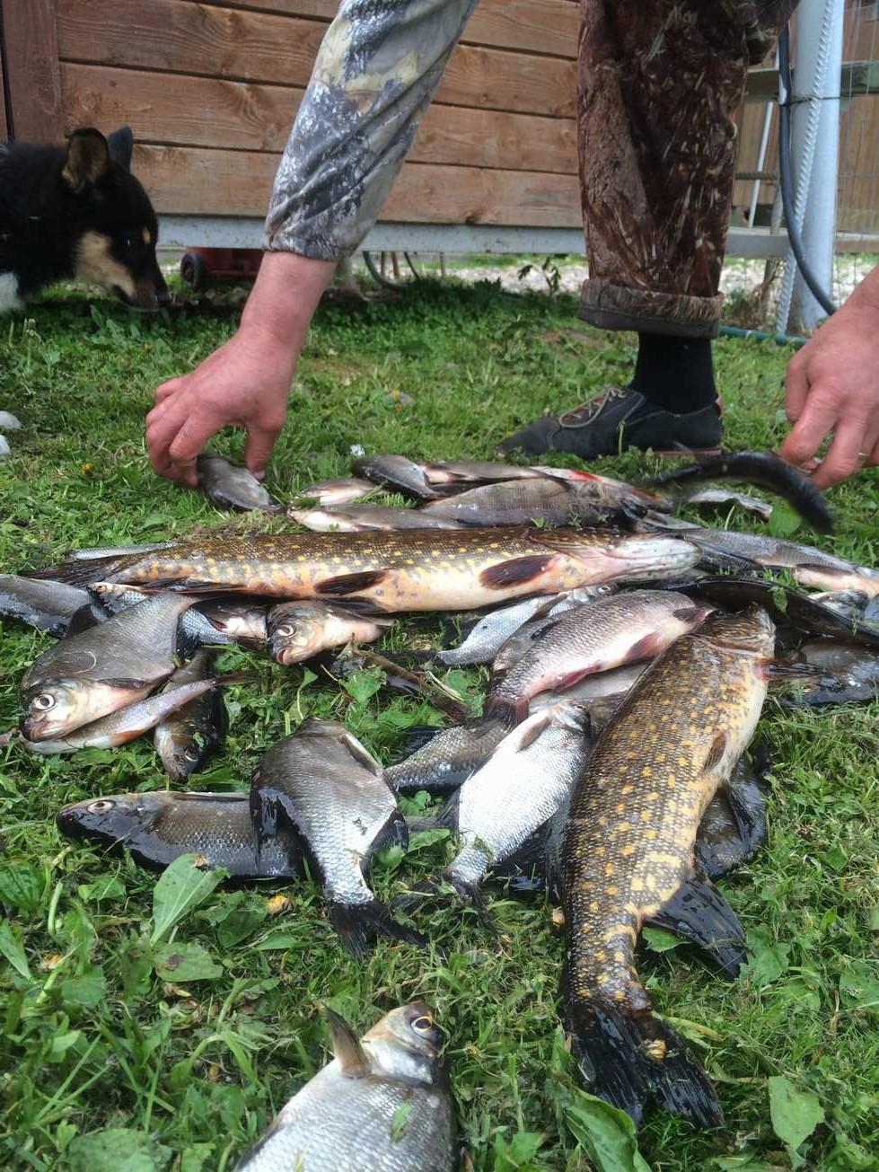медвежий угол рыбалка тульская область