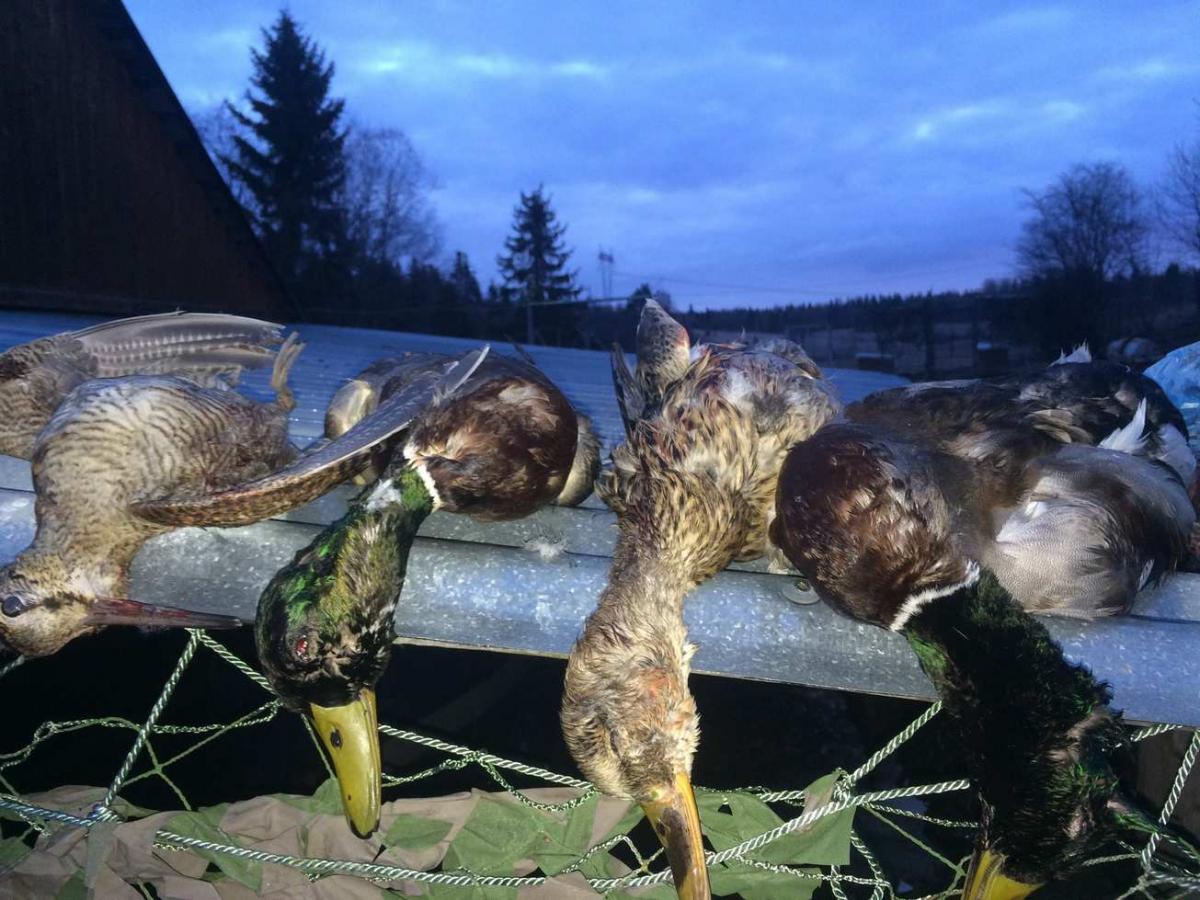 Весенняя охота 2018, открытие весенней охоты 2018, сроки