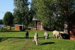 Фото базы Территория Медвежий угол разное