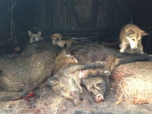 Белоруссия охота и рыбалка