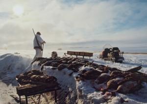 Таймыр - туры от базы Медвежий угол